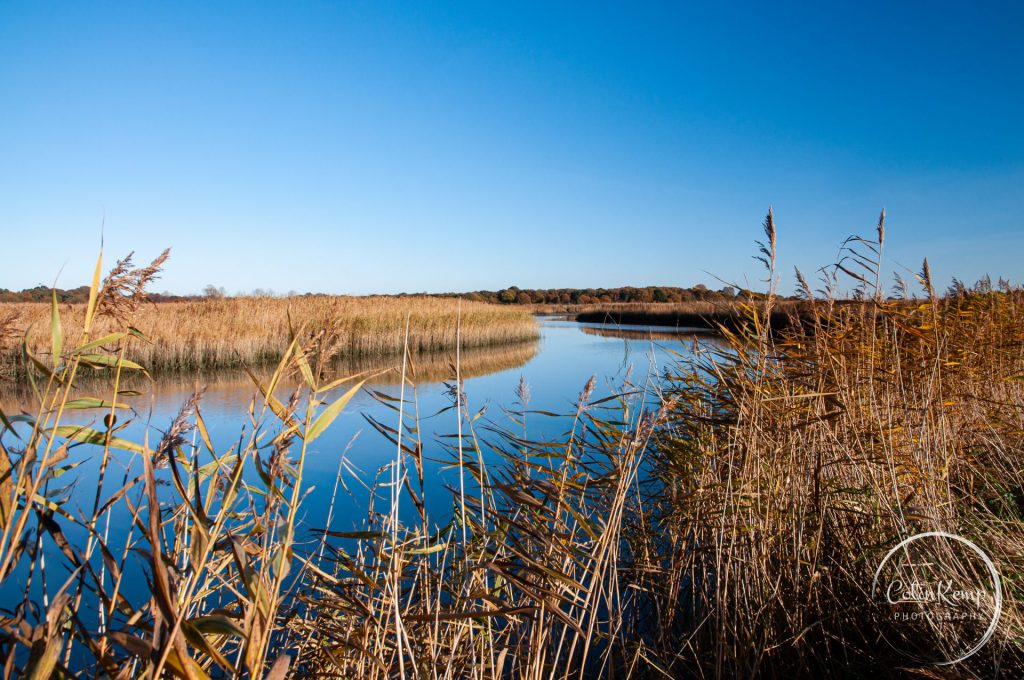 Late autumn landscape of Reeds and river at Snape Maltings Suffolk. River disappears around a bend towards horizon while foreground framed by reeds.  Image reflects good photographic framing compared to other image on this post.
