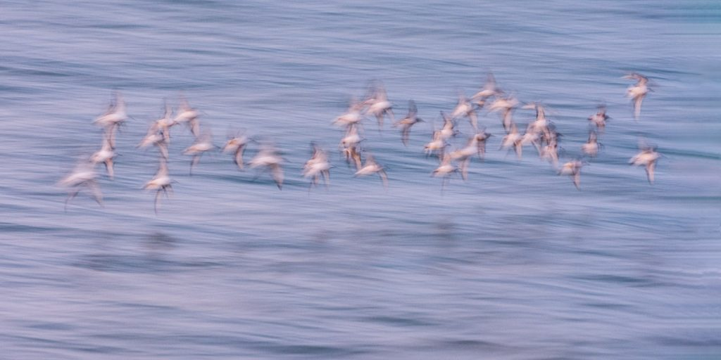 Photograph-of-abstract-birds-in-flight-over-water-in evening-light. A-new-listing